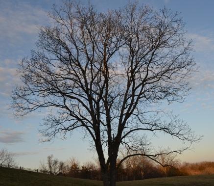 Gravity tree.jpg