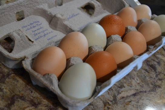 omelet 1 (2).JPG