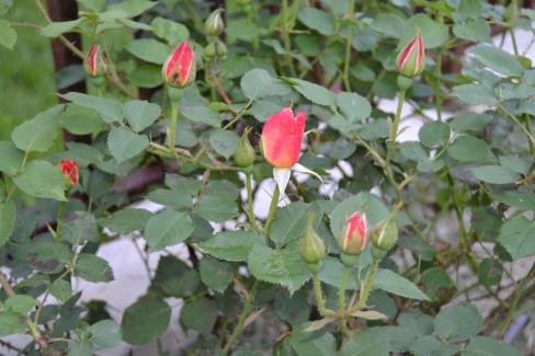first blooms (1).JPG