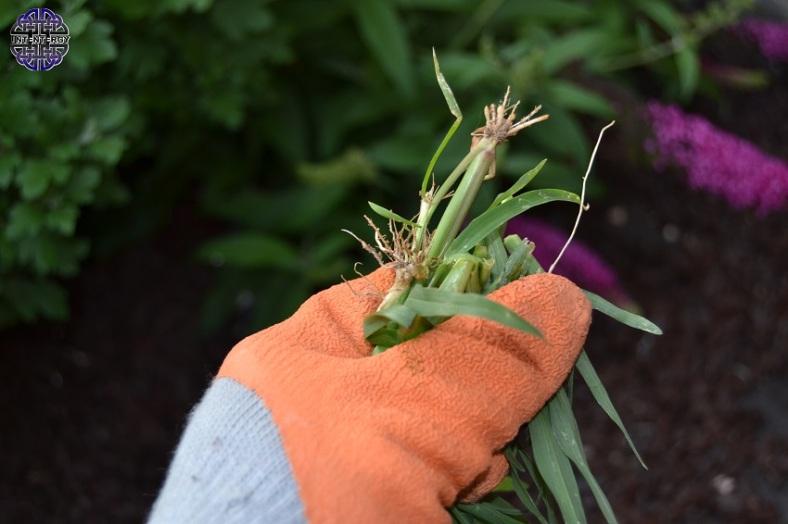 Weeding 2