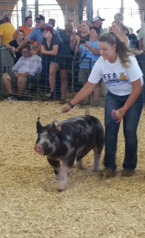 Pig Play 2.jpg