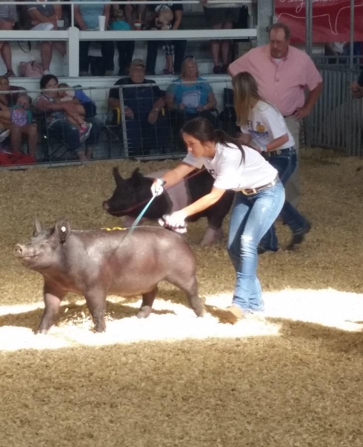 Pig Play