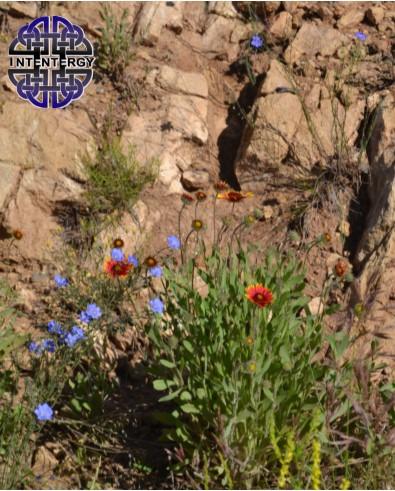 Blooms 3.jpg